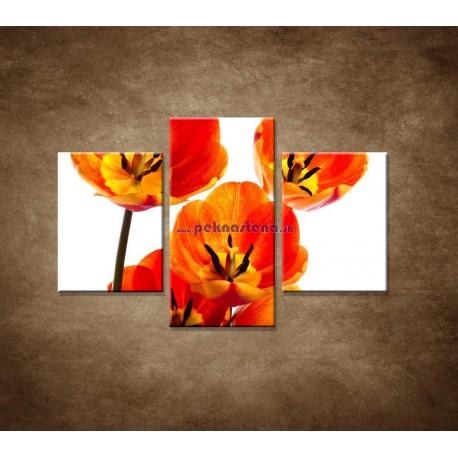 Obrazy na stenu - Oranžové tulipány - 3dielny 90x60cm