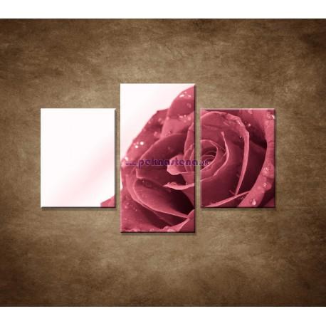 Obrazy na stenu - Ruža s rosou - 3dielny 90x60cm