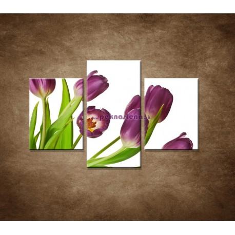 Obrazy na stenu - Fialové tulipány - 3dielny 90x60cm