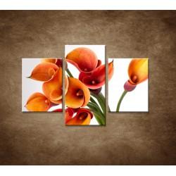 Obrazy na stenu - Oranžové kaly - 3dielny 90x60cm