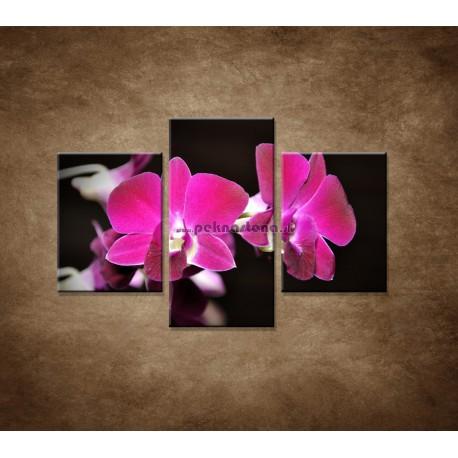 Obrazy na stenu - Ružová orchidea na čiernom pozadí - 3dielny 90x60cm