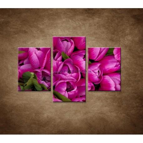 Obrazy na stenu - Krásne tulipány - 3dielny 90x60cm