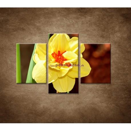Obrazy na stenu - Narcis - detail - 3dielny 90x60cm