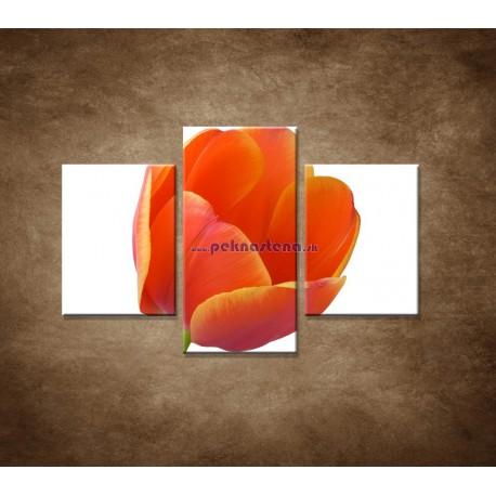 Obrazy na stenu - Tulipán - detail - 3dielny 90x60cm