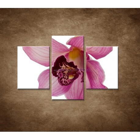 Obrazy na stenu - Orchidea - detail - 3dielny 90x60cm
