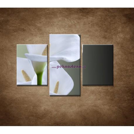 Obrazy na stenu - Tri biele kaly - 3dielny 90x60cm