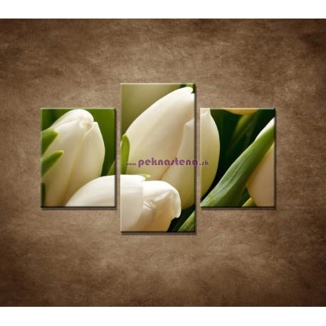 Obrazy na stenu - Kytica tulipánov - detail - 3dielny 90x60cm