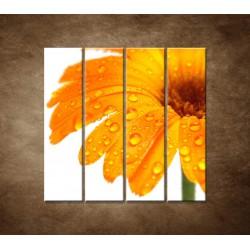 Obrazy na stenu - Oranžová gerbera - 4dielny 120x120cm