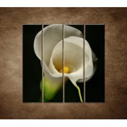 Obrazy na stenu - Kala - 4dielny 120x120cm