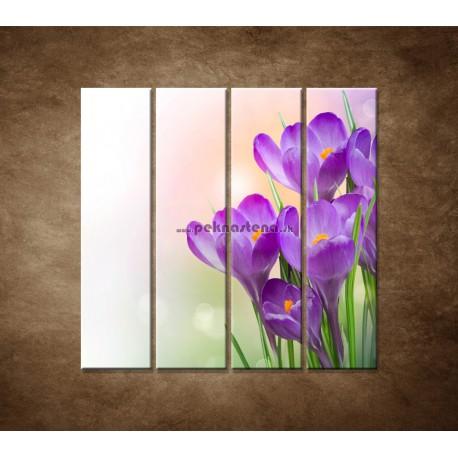 Obrazy na stenu - Krokusy - 4dielny 120x120cm