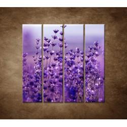 Obrazy na stenu - Levanduľa - 4dielny 120x120cm