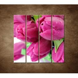 Obrazy na stenu - Tulipány  - 4dielny 120x120cm