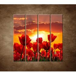 Západ slnka nad tulipánmi - 4dielny 120x120cm