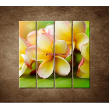 Obrazy na stenu - Žltá orchidea - 4dielny 120x120cm