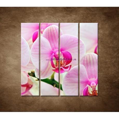 Obrazy na stenu - Ružová orchidea - 4dielny 120x120cm