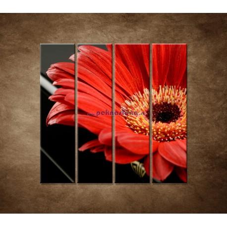 Obrazy na stenu - Gerbera - 4dielny 120x120cm