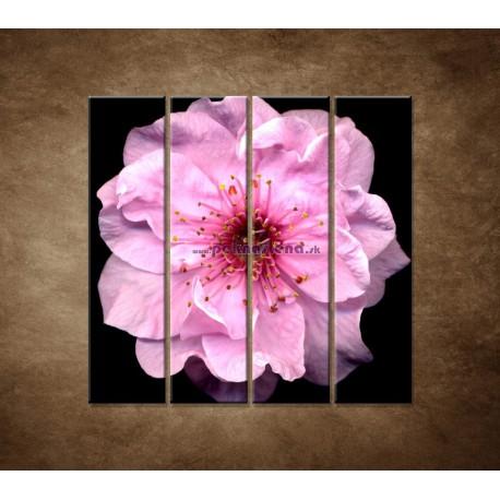 Obrazy na stenu - Kvet čerešne - 4dielny 120x120cm