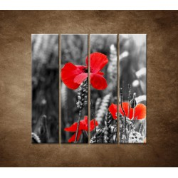 Červené vlčie maky - 4dielny 120x120cm
