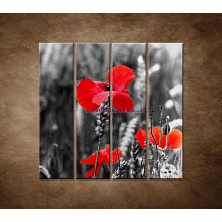 Obrazy na stenu - Červené vlčie maky - 4dielny 120x120cm