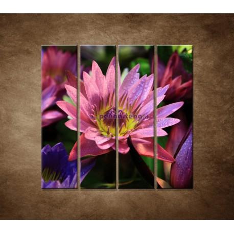 Obrazy na stenu - Lotosové kvety - 4dielny 120x120cm