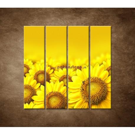 Obrazy na stenu - Lúka slnečníc - 4dielny 120x120cm
