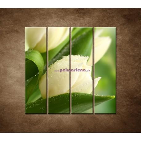Obrazy na stenu - Rosa na tulipáne - 4dielny 120x120cm