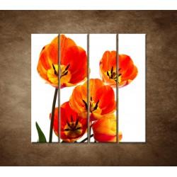 Oranžové tulipány - 4dielny 120x120cm