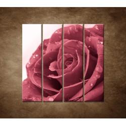 Ruža s rosou - 4dielny 120x120cm