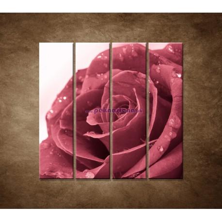 Obrazy na stenu - Ruža s rosou - 4dielny 120x120cm