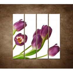 Obrazy na stenu - Fialové tulipány - 4dielny 120x120cm