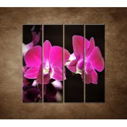 Ružová orchidea na čiernom pozadí - 4dielny 120x120cm