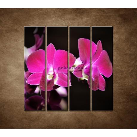 Obrazy na stenu - Ružová orchidea na čiernom pozadí - 4dielny 120x120cm