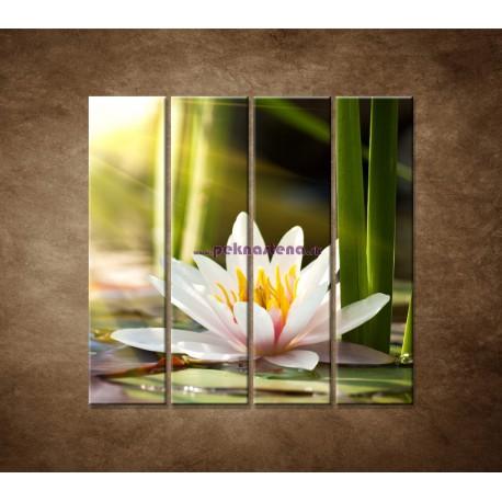 Obrazy na stenu - Lekno - 4dielny 120x120cm