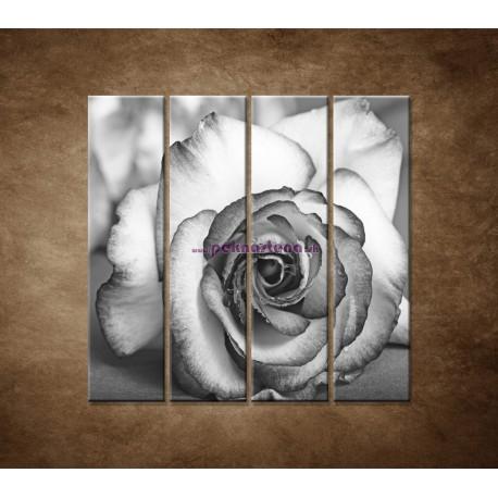 Obrazy na stenu - Ruža - 4dielny 120x120cm
