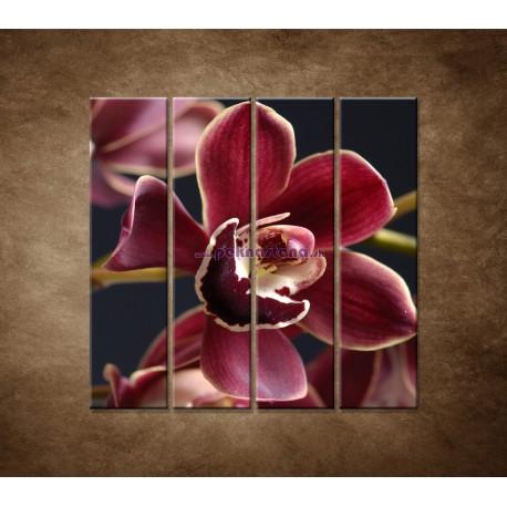 Obrazy na stenu - Bordová orchidea - 4dielny 120x120cm