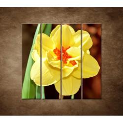 Narcis - detail - 4dielny 120x120cm