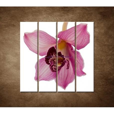 Obrazy na stenu - Orchidea - detail - 4dielny 120x120cm