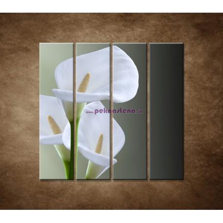 Obrazy na stenu - Tri biele kaly - 4dielny 120x120cm