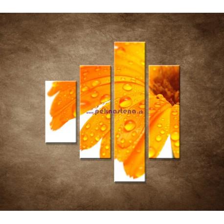 Obrazy na stenu - Oranžová gerbera - 4dielny 80x90cm