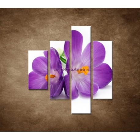 Obrazy na stenu - Krokus - 4dielny 80x90cm