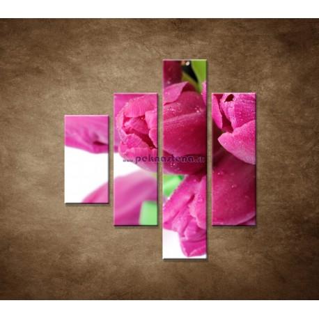 Obrazy na stenu - Tulipány - 4dielny 80x90cm