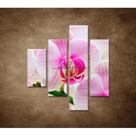 Obrazy na stenu - Ružová orchidea - 4dielny 80x90cm
