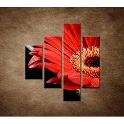 Obrazy na stenu - Gerbera - 4dielny 80x90cm