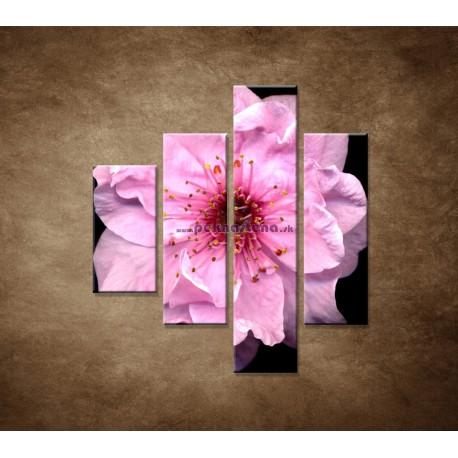 Obrazy na stenu - Kvet čerešne - 4dielny 80x90cm