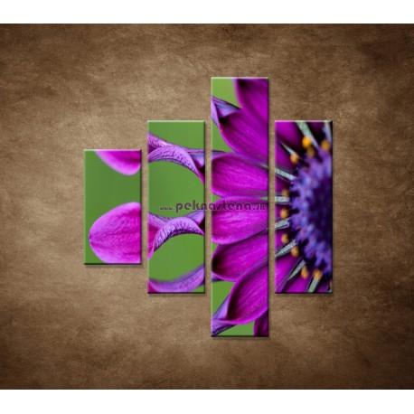 Obrazy na stenu - Tropický kvet - 4dielny 80x90cm