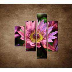 Obrazy na stenu - Lotosové kvety - 4dielny 80x90cm