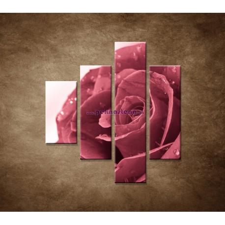 Obrazy na stenu - Ruža s rosou - 4dielny 80x90cm