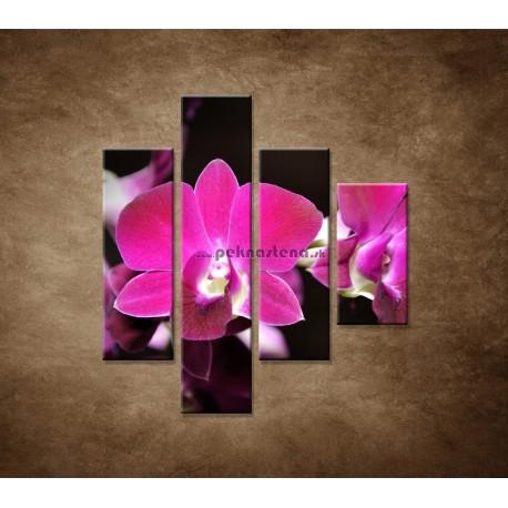 Obrazy na stenu - Ružová orchidea na čiernom pozadí - 4dielny 80x90cm
