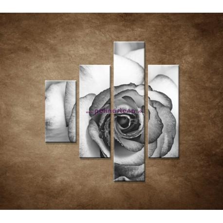 Obrazy na stenu - Ruža - 4dielny 80x90cm