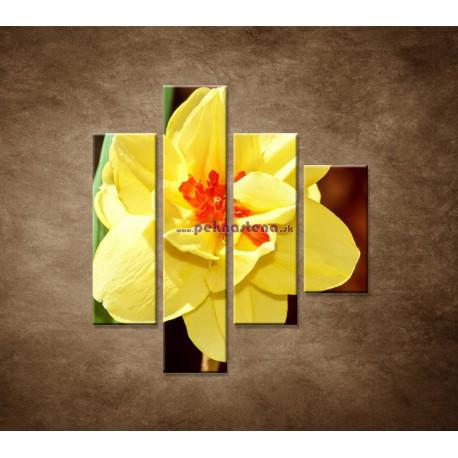 Obrazy na stenu - Narcis - detail - 4dielny 80x90cm
